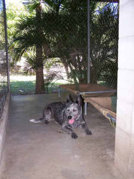 Boarding Kennels For Dogs Townsville